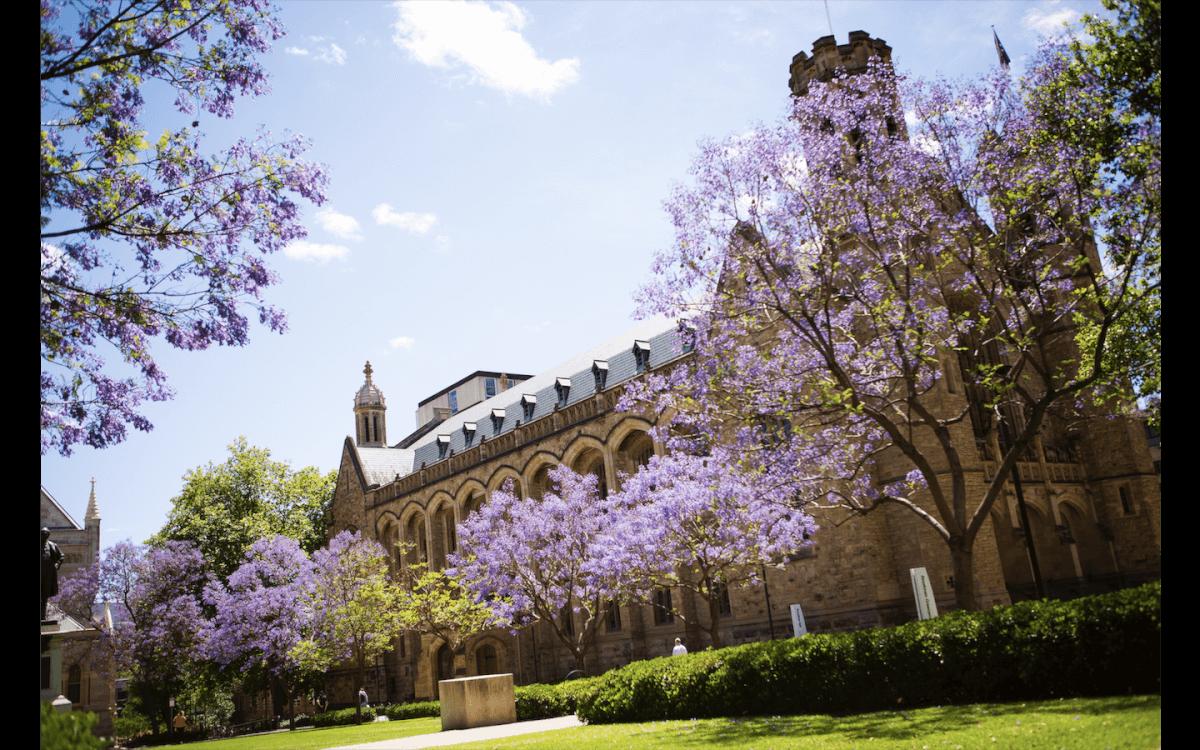 アデレード大学イメージ